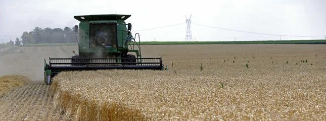 Birleşmiş Milletler Gıda ve Tarım Örgütü (FAO): Küresel Gıda Fiyatları Haziran'da Yükseldi